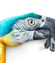Pure-13-Nx_visual_Parrot